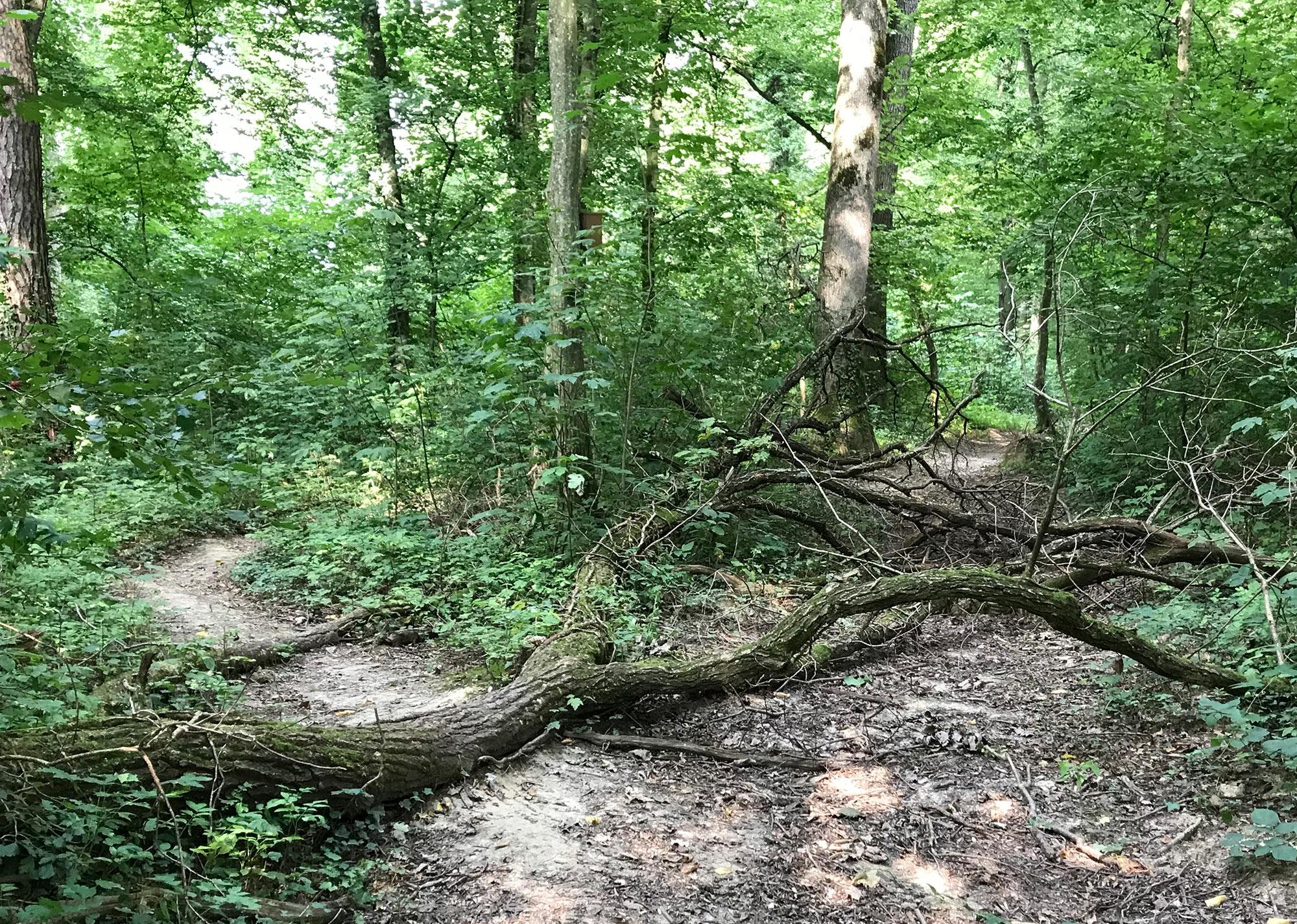Ingrid Rönelt - Bäume auf dem Weg